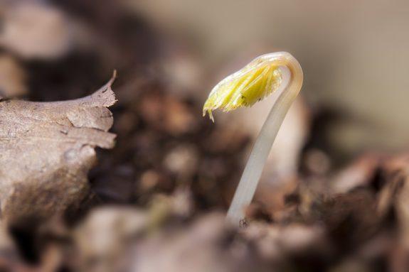 seedling-1284663_960_720
