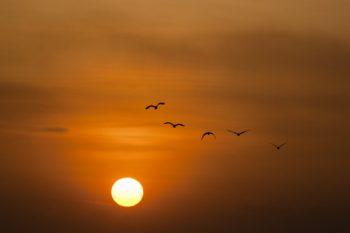 birds-sky-sun-39694